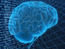 Drahtgitter Gehirn