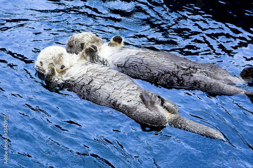 cute see otter holding each other's hand