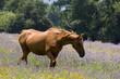 canvas print picture cheval 29