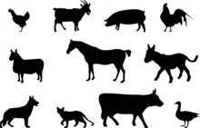 Domestic Animals Illustration