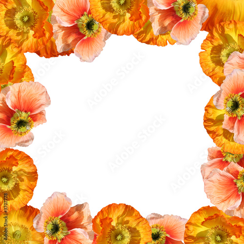 frame of poppy seeds - Buy this stock photo and explore similar ...