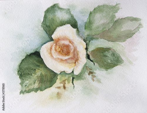 Obraz w ramie rose water-colour 3