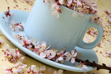 Cup Of Coffe With Flowers