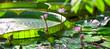 Leinwandbild Motiv Tropical garden