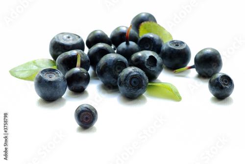 Fotografija bilberry close up