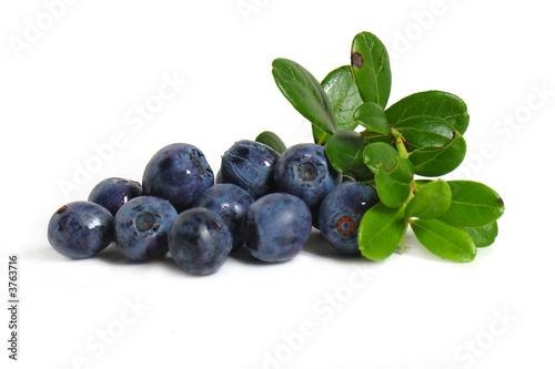 Scattering of bilberries Fototapeta