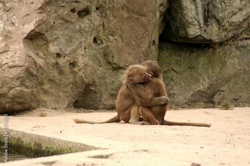 Photo  monkey cuddle