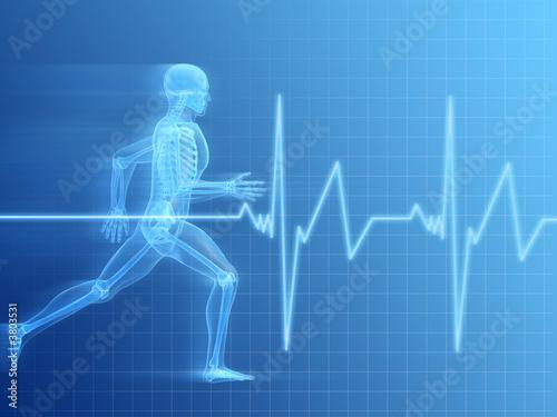 Fotografie, Obraz  anatomie eines laufenden menschen