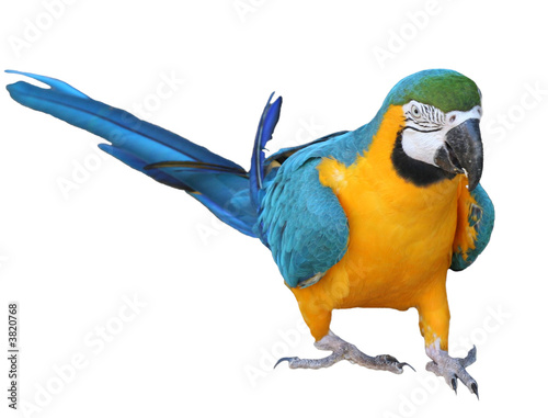 Photo  perroquet