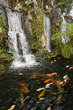 canvas print picture - Koi fish pond with waterfalls in a Chinese Buddhist temple