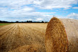 canvas print picture - Yellow grain harvested on a farm field