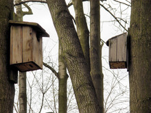 Birds House In A Forest