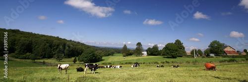 Leinwand Poster les vaches et la ferme