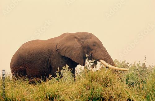 Wall Murals Elephant elephant3