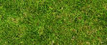 Dense Mixed Grass 1