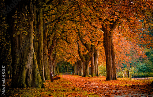 Spoed Foto op Canvas Bruin autumn colors in the forest