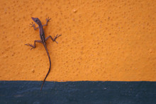 Gecko On Wall
