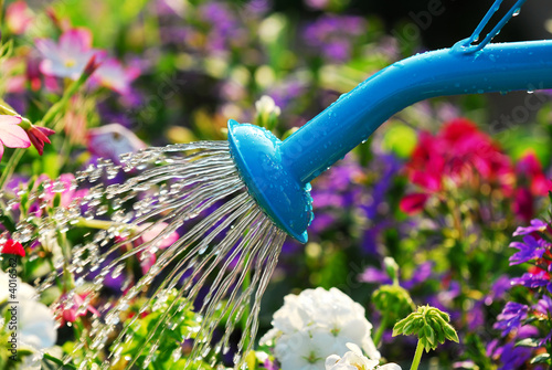 Fotografia  Watering flowers