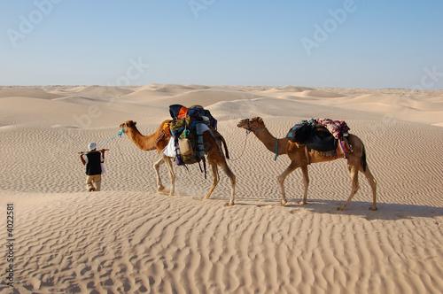 Photo camel caravan in desert Sahara