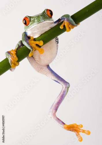 Crazy frog Tableau sur Toile