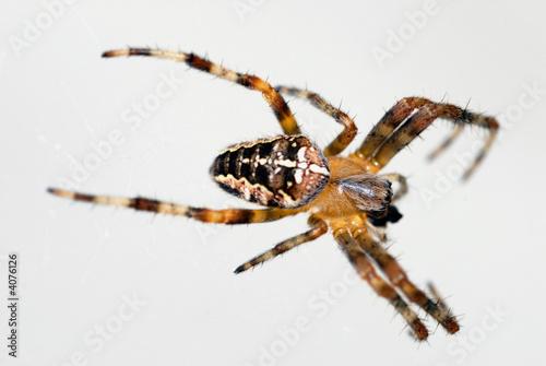 Fotografie, Obraz  L'araignée