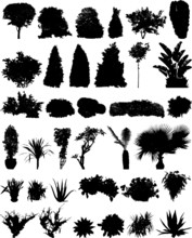 35 Trees Shrubberies Flowers