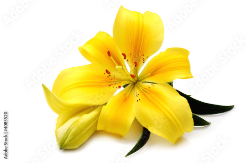 Photo  Yellow lily
