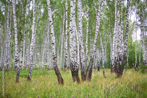 Deurstickers Berkbosje Summer birch wood
