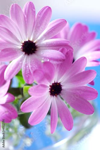Foto-Schiebegardine ohne Schienensystem - Pink daisies bouquet