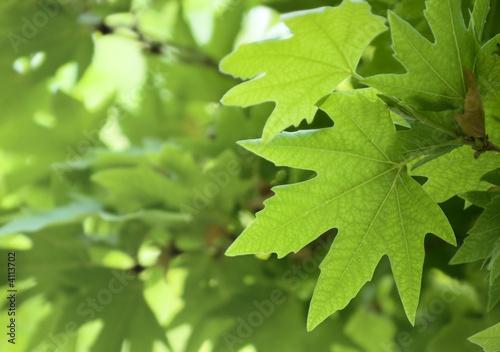 Foto-Schiebegardine ohne Schienensystem - green leaves, shallow focus
