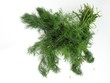 bunch of green dill