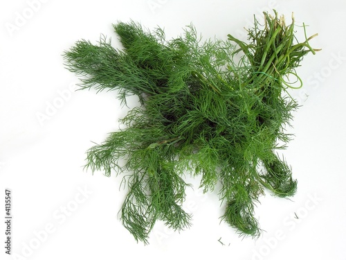 Garden Poster Plant bunch of green dill