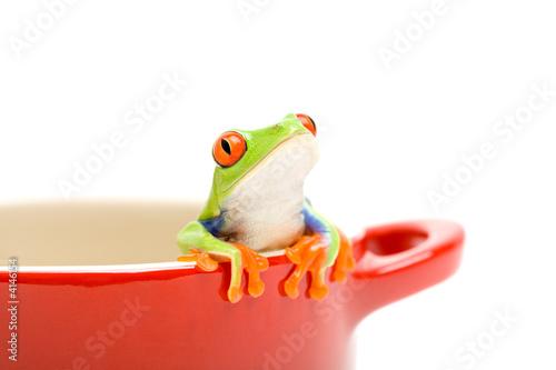Foto op Canvas Kikker frog looking out of pot