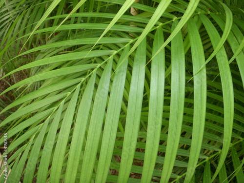 Areca Palm Branch Canvas Print