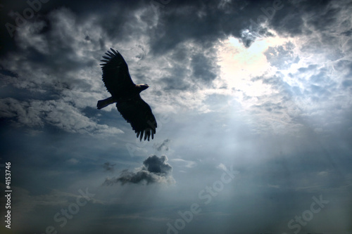 Acrylic Prints Eagle Eagle in the sky.