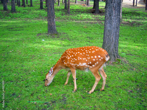 Printed kitchen splashbacks Natuur deer