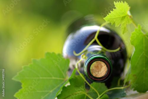 Bottle of wine between grapevine leves.