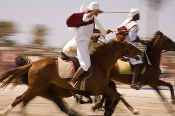 Fototapeta Koń Horses exhibition at Djerba beach with panning technique