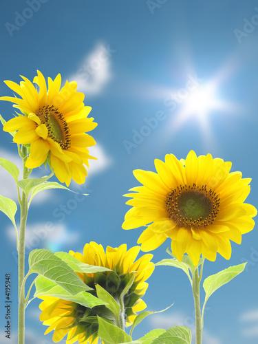 Foto-Schiebegardine ohne Schienensystem - sonnenblumen (von Phimak)
