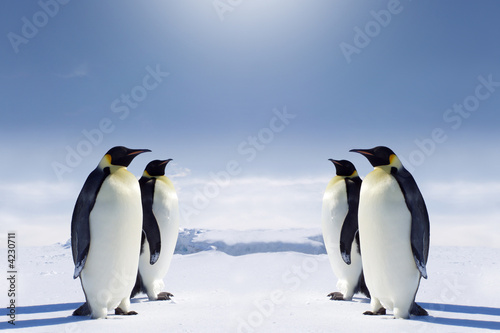 Fotomural At the South pole