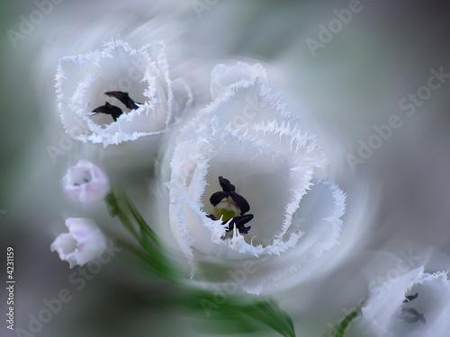 Fotografia White tenderness