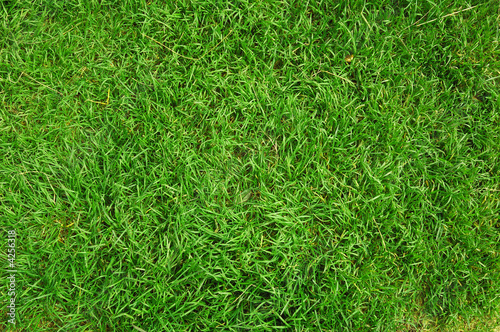 Foto op Plexiglas Gras green grass background