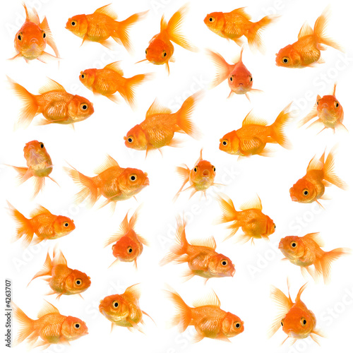 Group of goldfishes Fototapet