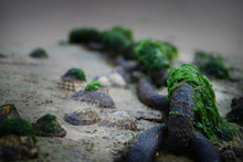Chain On Beach Covered With Sea Weed