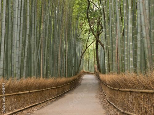 Papiers peints Kyoto Kyoto Bamboo grove