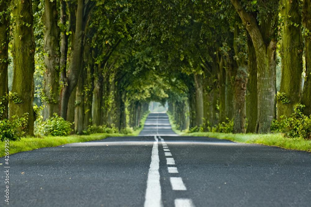 Fototapeta Tree's tunnel