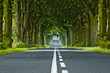 canvas print picture - Tree's tunnel