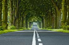 Tree's Tunnel