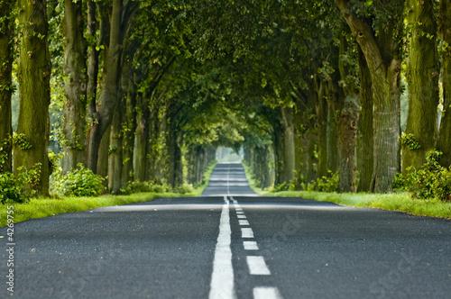Tunel drzewa