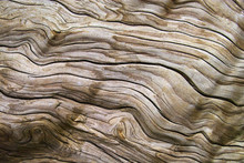 Driftwood - Treibholz